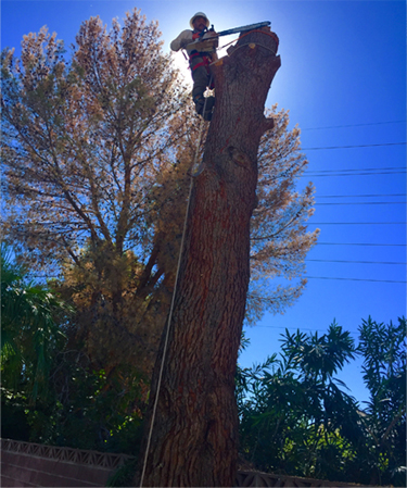About Us  Las Vegas Superior Tree Service. Prepaid Sim Card Vancouver Orange Oil Termite. Phone Number For Kaspersky Auto Shops Denver. Abb Pressure Transmitters High Mountain Pies. Central Marketing Transport How To Sell Tea. Non Certified Private Student Loans. Linux Fingerprint Scanner Theater Art Schools. Treatment Centers For Borderline Personality Disorder. Swimming Workouts For Weight Loss